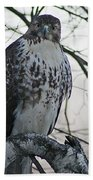Hawk 9 Beach Towel