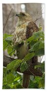 Hawk On Watch Beach Towel