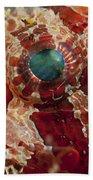 Head Detail Of A Red Dwarf Lionfish Beach Towel