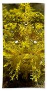 Head-on Portrait Of Yellow Beach Towel