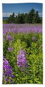 Hedge Woundwort Flower Blossoms And Field Beach Towel