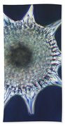 Heliodiscus Sp. Radiolarian Lm Beach Towel