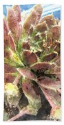 Hen And Chicks Plant Beach Towel