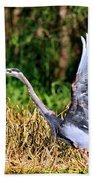 Heron Taking To Flight Beach Sheet