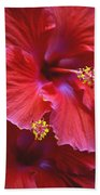 Hibiscus Duo Beach Towel