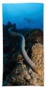 Highly Venomous Olive Sea Snake Beach Towel