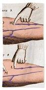 Historical Illustration Of Blood Vessels Beach Towel