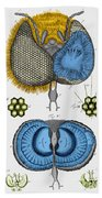 Historical Illustration Of Honey Bee Eye Beach Towel
