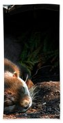 Hit The Otter Snooze Beach Towel