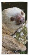 Hoffmanns Two-toed Sloth Costa Rica Beach Towel by Suzi Eszterhas