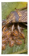 Homopteran Insect Beach Towel