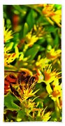 Honey Bee And Sedum  Beach Towel
