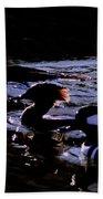 Hooded Mergansers And Moon Glare Beach Towel