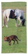 Horse And Fox Beach Towel