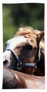 Horse At Mule Days 2012 - Benson Beach Towel