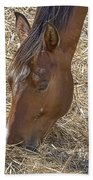 Horse With No Name Beach Towel