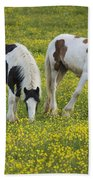 Horses Grazing, County Tyrone, Ireland Beach Towel