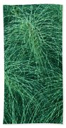 Horsetail Fern Beach Towel