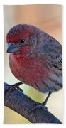 Housefinch IIi Beach Towel