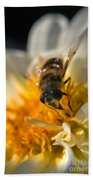 Hoverfly On White Flower Beach Towel