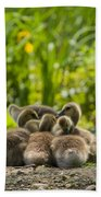Huddled Goslings Baby Geese Along River's Edge Beach Towel