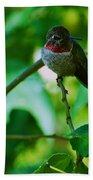 Hummingbird At Rest Beach Sheet