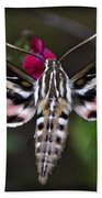 Hummingbird Moth - White-lined Sphinx Moth Beach Towel