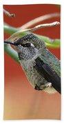 Hummingbird Nap Time  Beach Towel