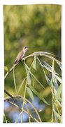 Hummingbird Resting In The Willow Beach Towel