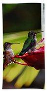 Hummingbirds At The Feeder Beach Towel