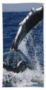 Humpback Whale Flipper Slap Hawaii Beach Towel