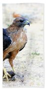 Hungry Red Teiled Hawk Beach Towel