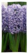 Hyacinth Hyacinthus Sp Skyline Variety Beach Towel
