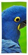 Hyacinth Macaw Beach Towel