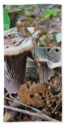 Hygrophorus Caprinus Mushrooms Beach Sheet