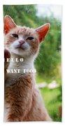I Want Food Cat Beach Towel