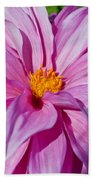 Ice Pink Dahlia Beach Towel
