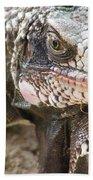 Iguana At Magens Bay Beach Towel