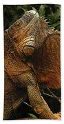 Iguana Costa Rica Beach Towel