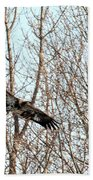 Immature Bald Eagle Flying Beach Towel