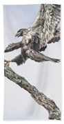 Immature Eagle At Play Beach Towel