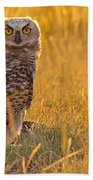 Immature Great Horned Owl Backlit Beach Towel