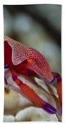 Imperator Commensal Shrimp On Eyed Sea Beach Towel
