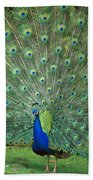 Indian Peafowl Pavo Cristatus Male Beach Towel
