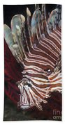 Indonesian Lionfish On A Wreck Site Beach Towel