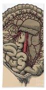 Inferior Mesenteric Artery And The Aorta Beach Towel
