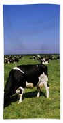 Ireland Friesian Cattle Beach Towel