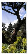 Irish National Botanic Gardens, Dublin Beach Towel