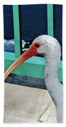 Ivis Ibis And Packy Beach Towel