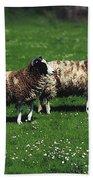 Jacob Sheep Beach Towel
